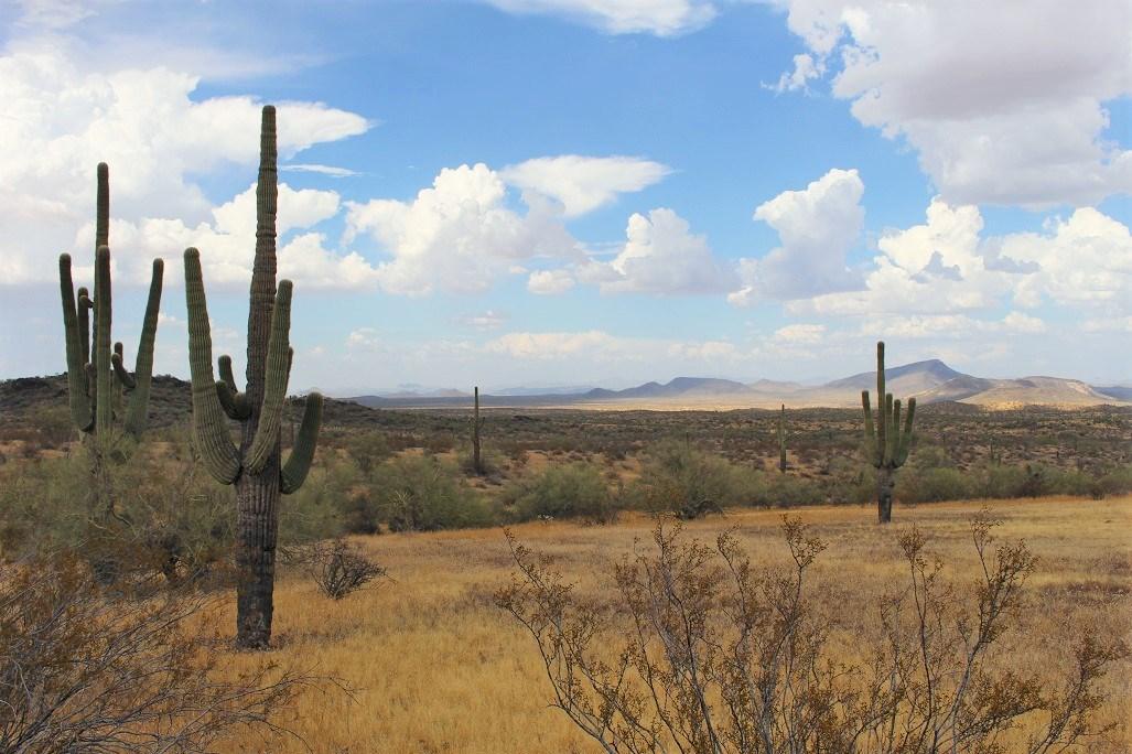 252+/- Head Cattle Ranch , Gordon Family Ranch, Aguila, AZ