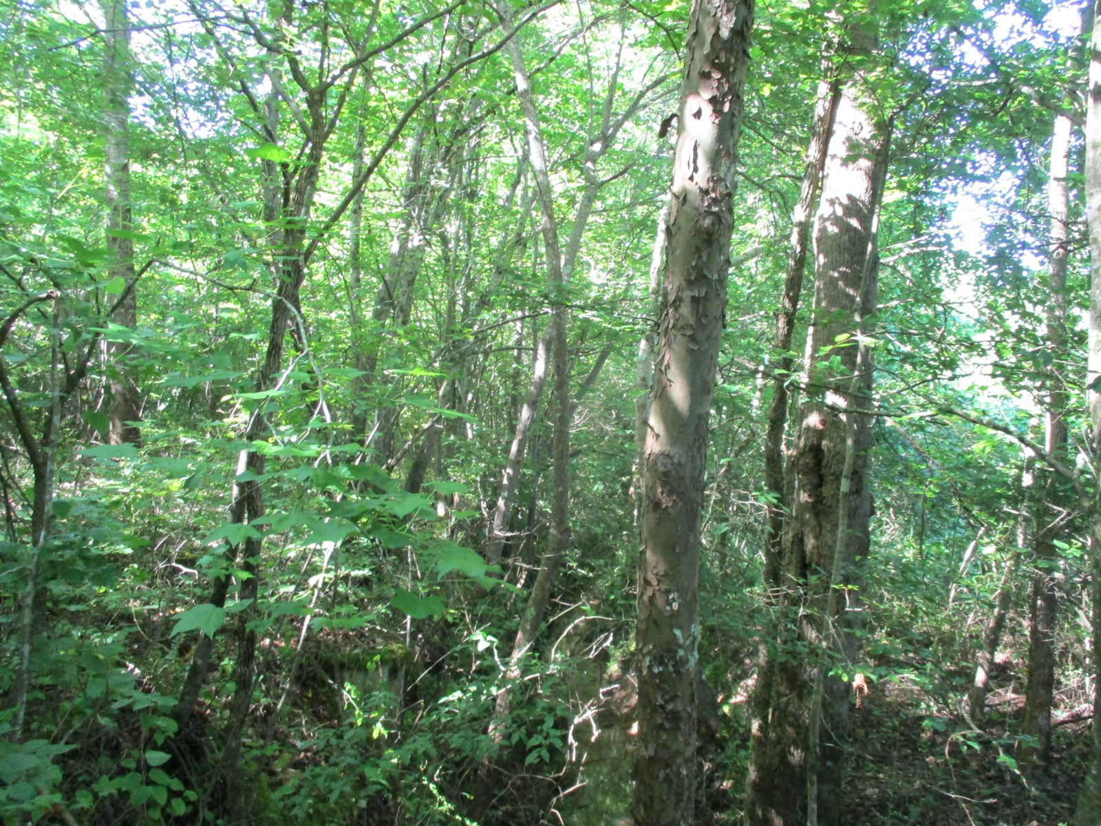 Hunting or Investment Property; near Selmer, TN