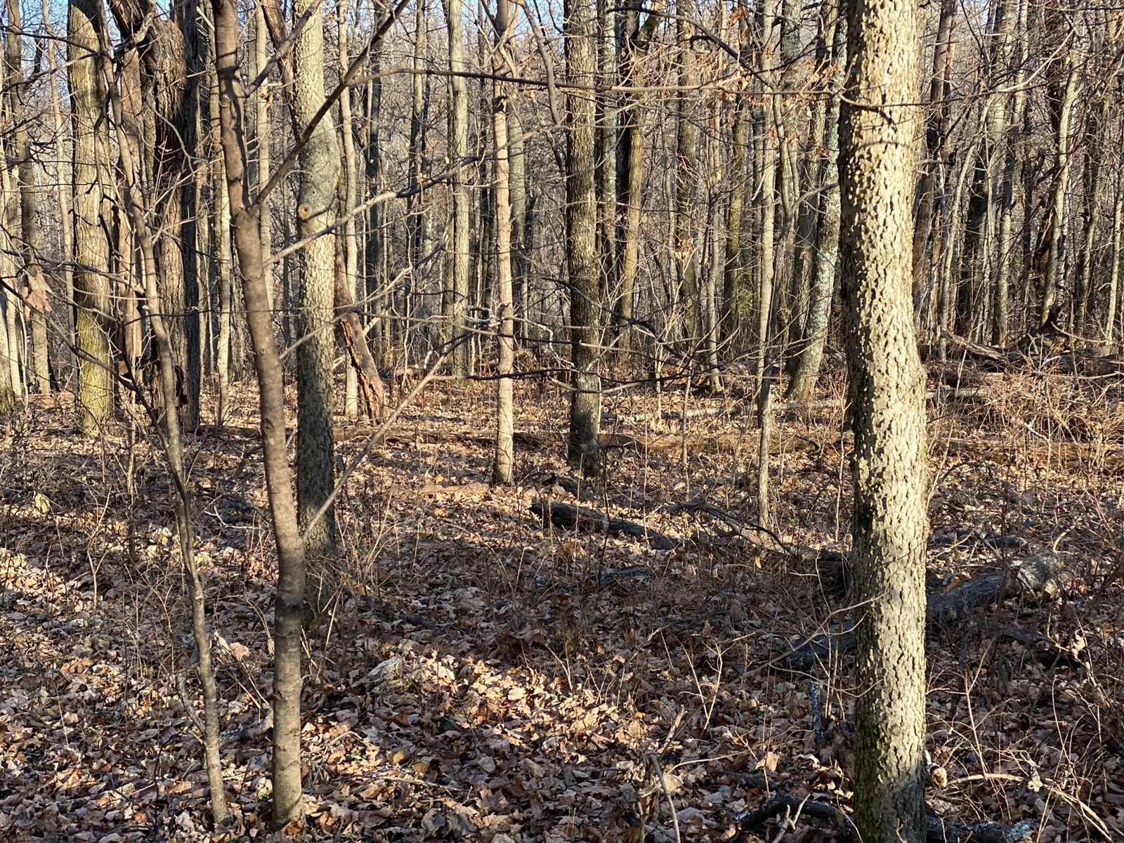 17 Acres of beautiful Tennessee Land for sale!