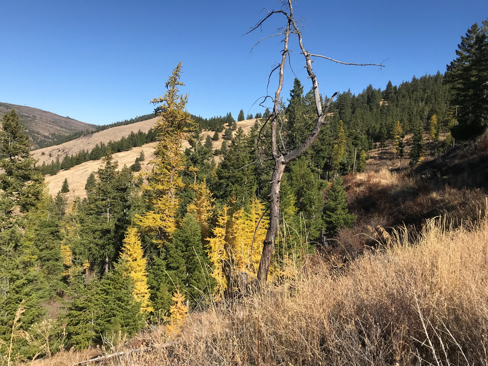 LAND FOR SALE IN PARADISE MT