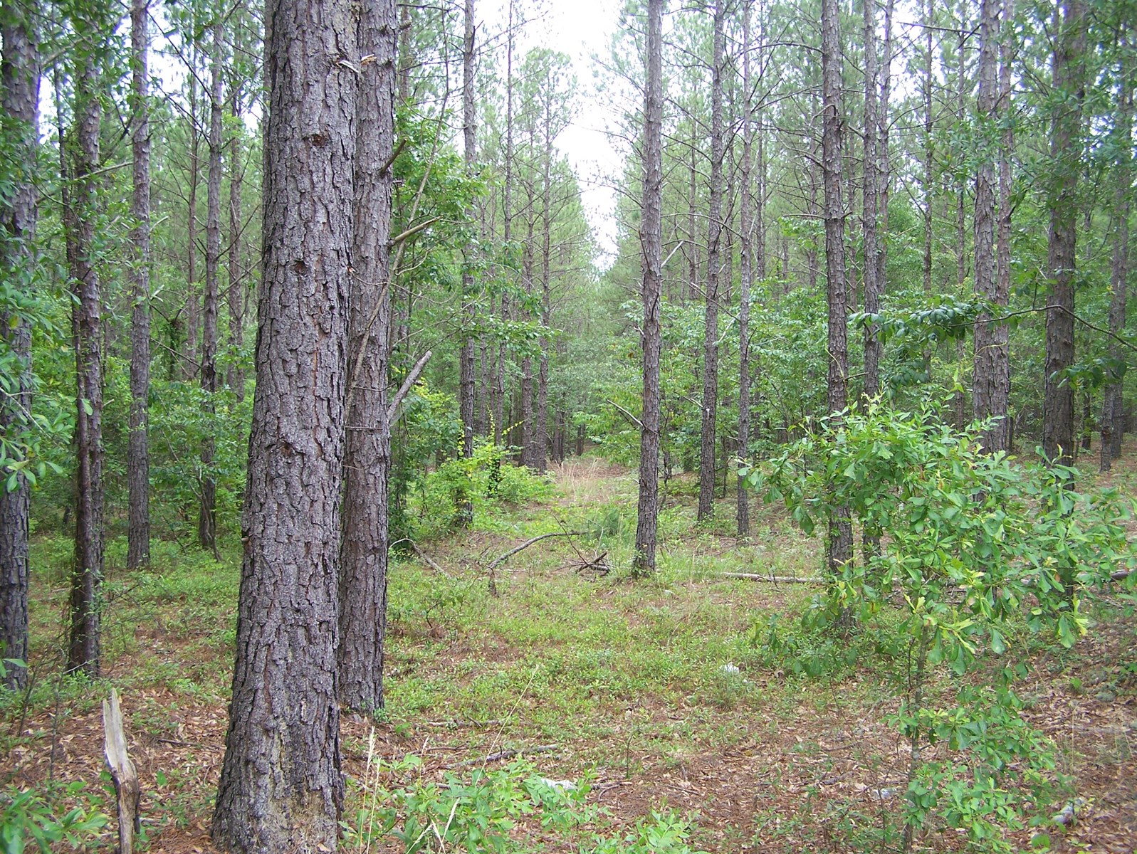 5.03 Level & Wooded Acres with Privacy 280 Ft Road Frontage
