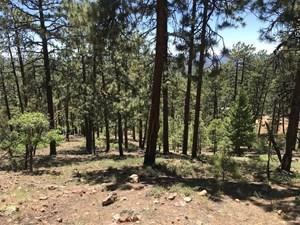 MOUNTAIN LAND FOR SALE CHAMA NM REAL ESTATE W ACREAGE