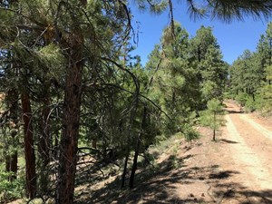 NORTHERN NM LAND FOR SALE CHAMA NM MOUNTAIN REAL ESTATE