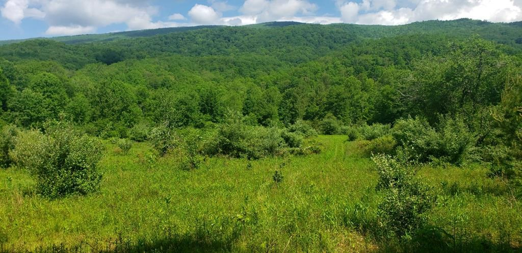 195 Acres Bland County, VA Joins National Forest