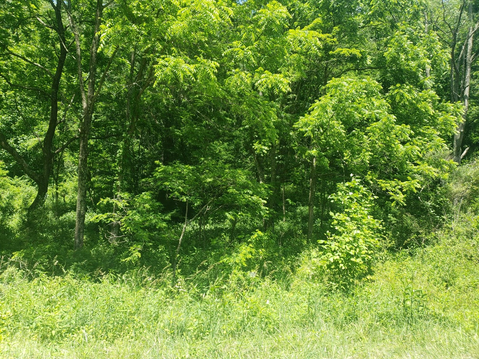 83.94 Acres Cavitts Creek North Tazewell VA Wooded Hunting