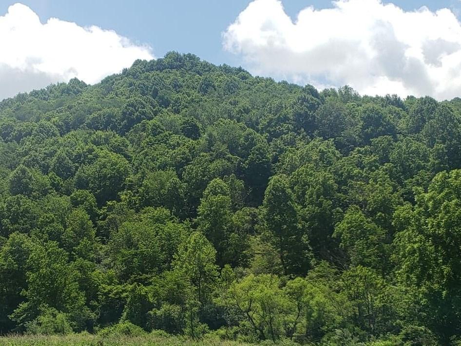 4 Acres Mountain Land Cavitts Creek Tazewell, VA Recreation