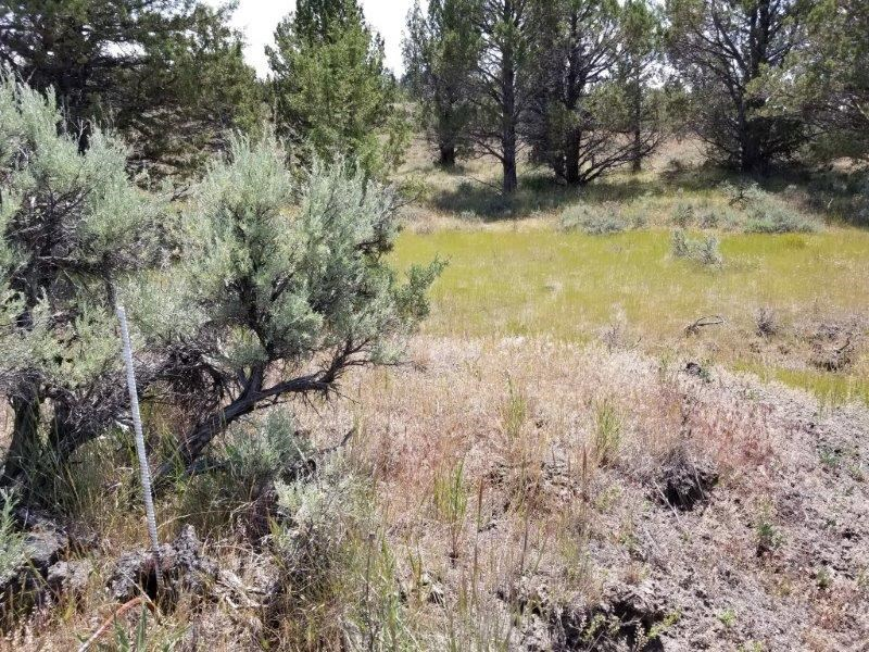 Walk to Rattlesnake Creek from this 1.62 +/- acres with view