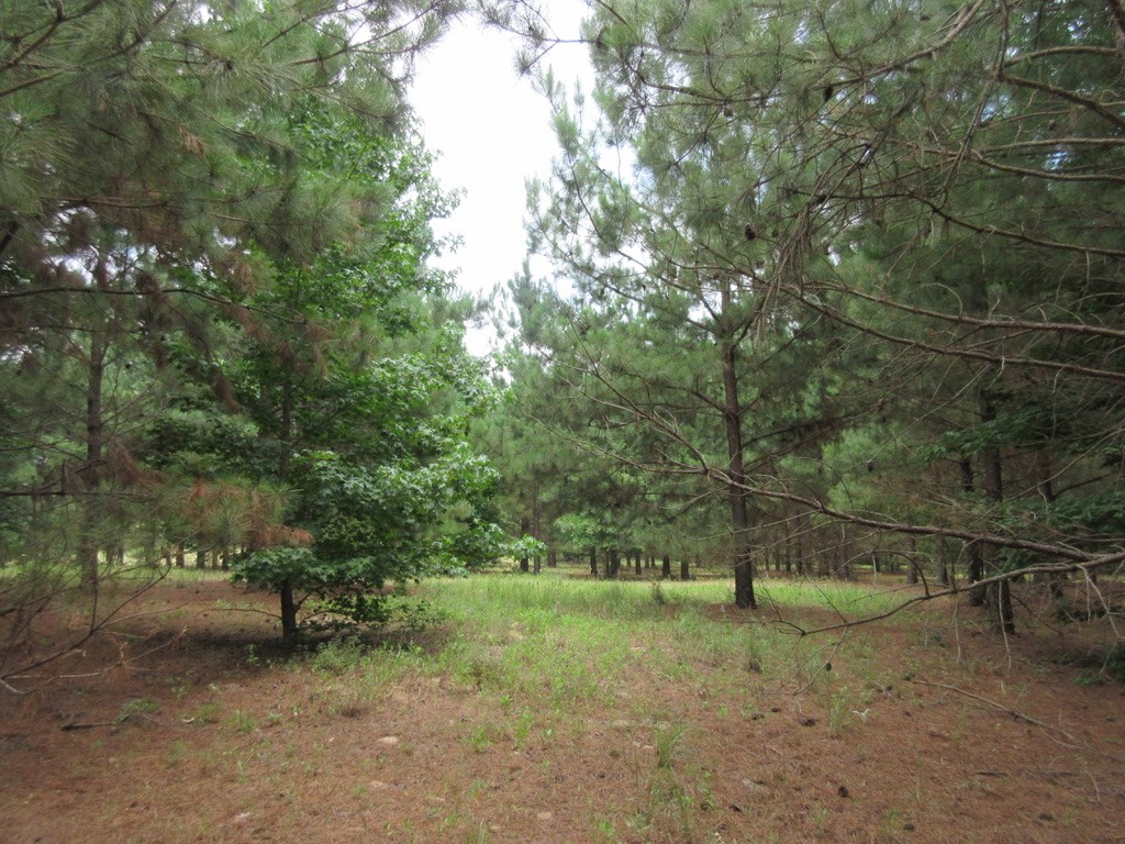 GREAT PLACE TO CALL HOME 7.9 ACRES IN EAST TEXAS