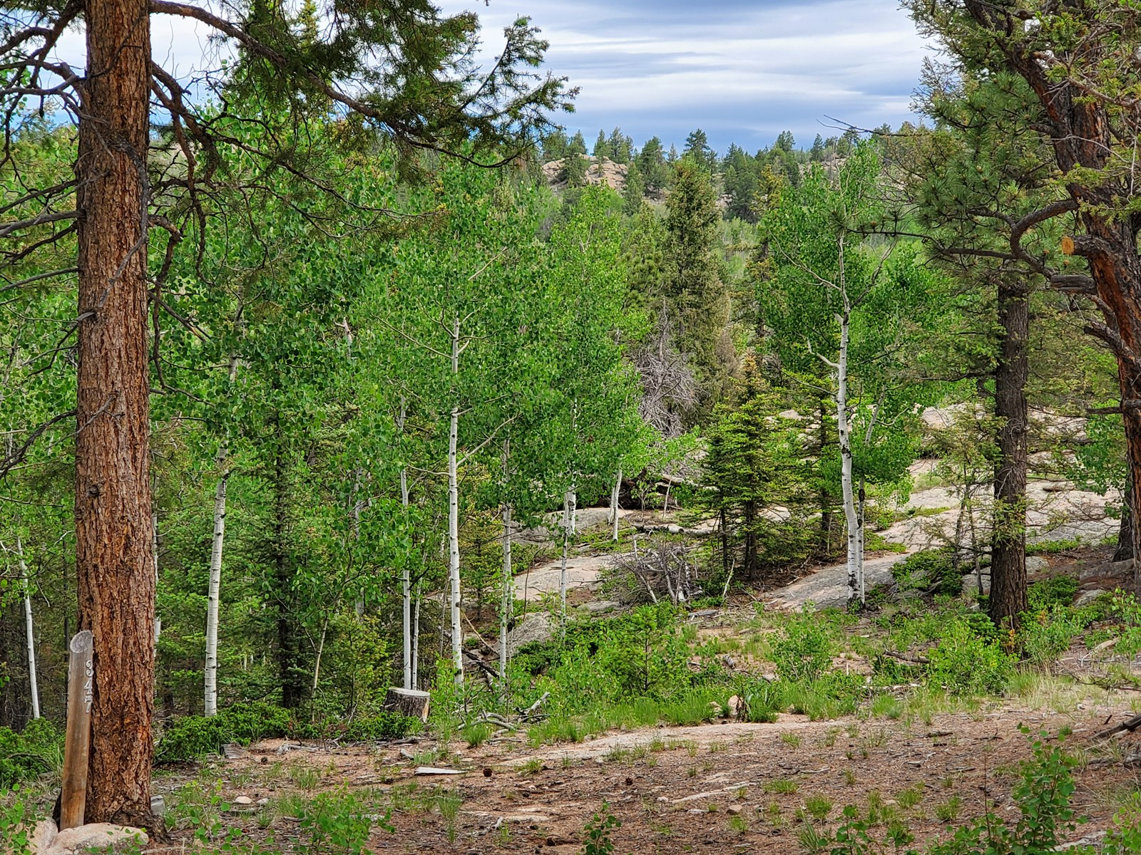 Wooded lot Florissant Lake George CO National Forest Hiking