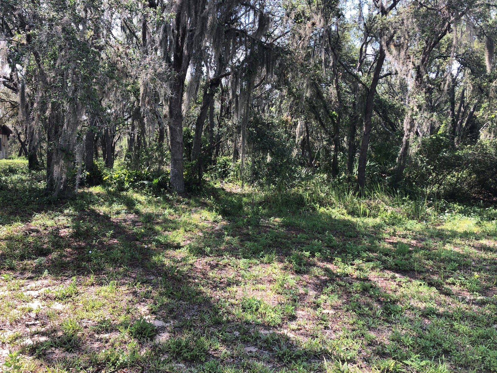 1.43 ACRES CENTRAL FL, BLUE JORDAN FOREST, EASY ACCESS