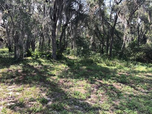 1.43 ACRES CENTRAL FL, BLUE JORDAN FOREST, EASY ACCESS