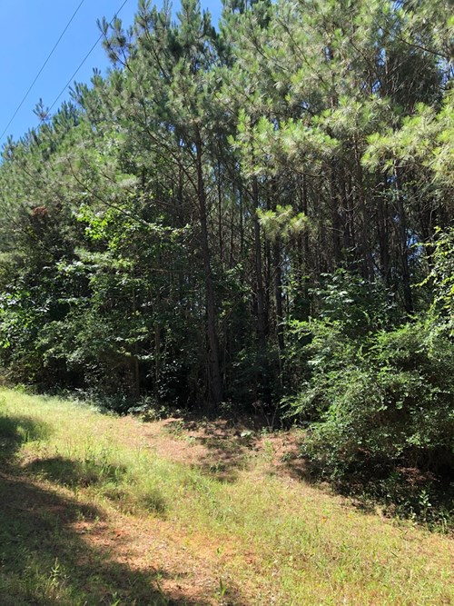 East TX Land For Sale, Cherokee Co, TX Hunting, Recreational