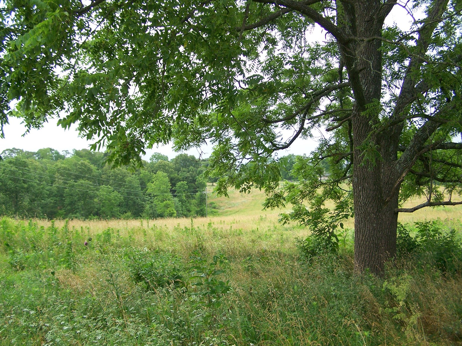 20 Acres Pasture and Timberland For Sale in Arkansas Ozarks