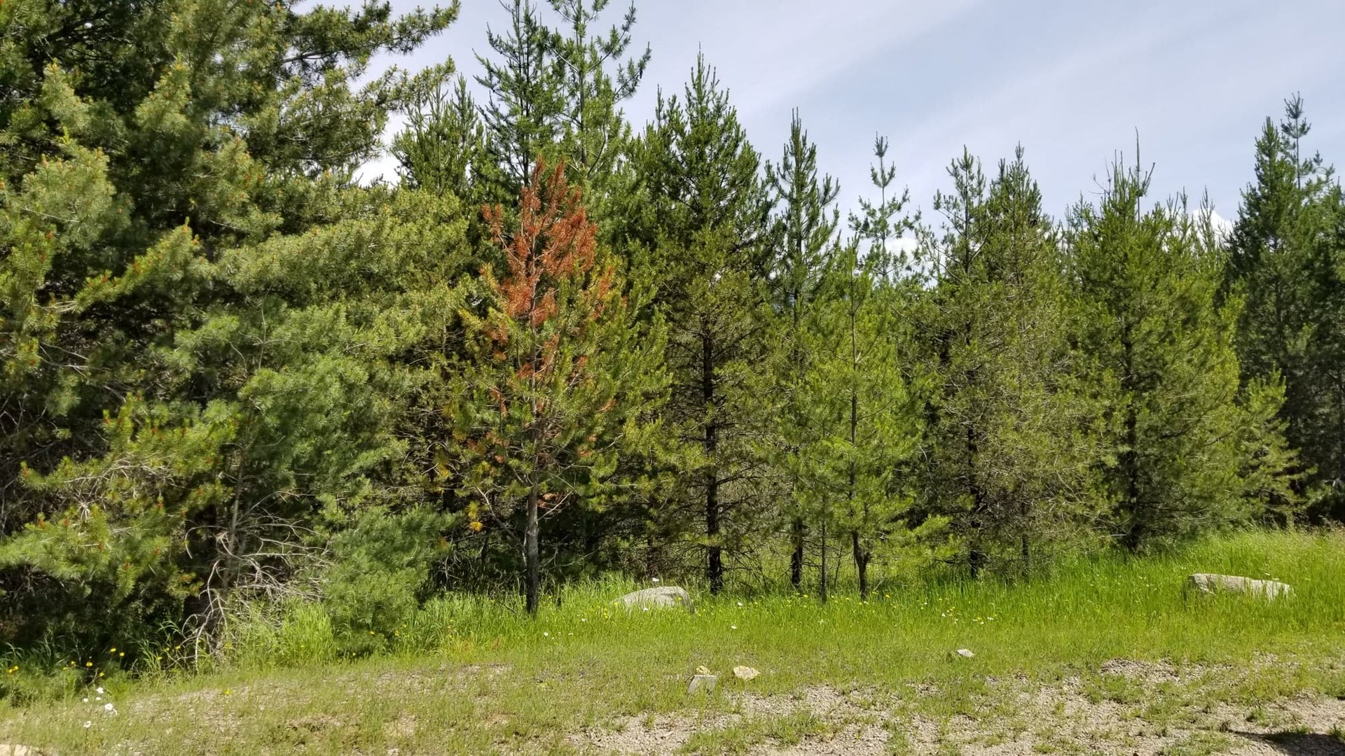 Beautiful 5 Acre Parcel In Priest River, Idaho