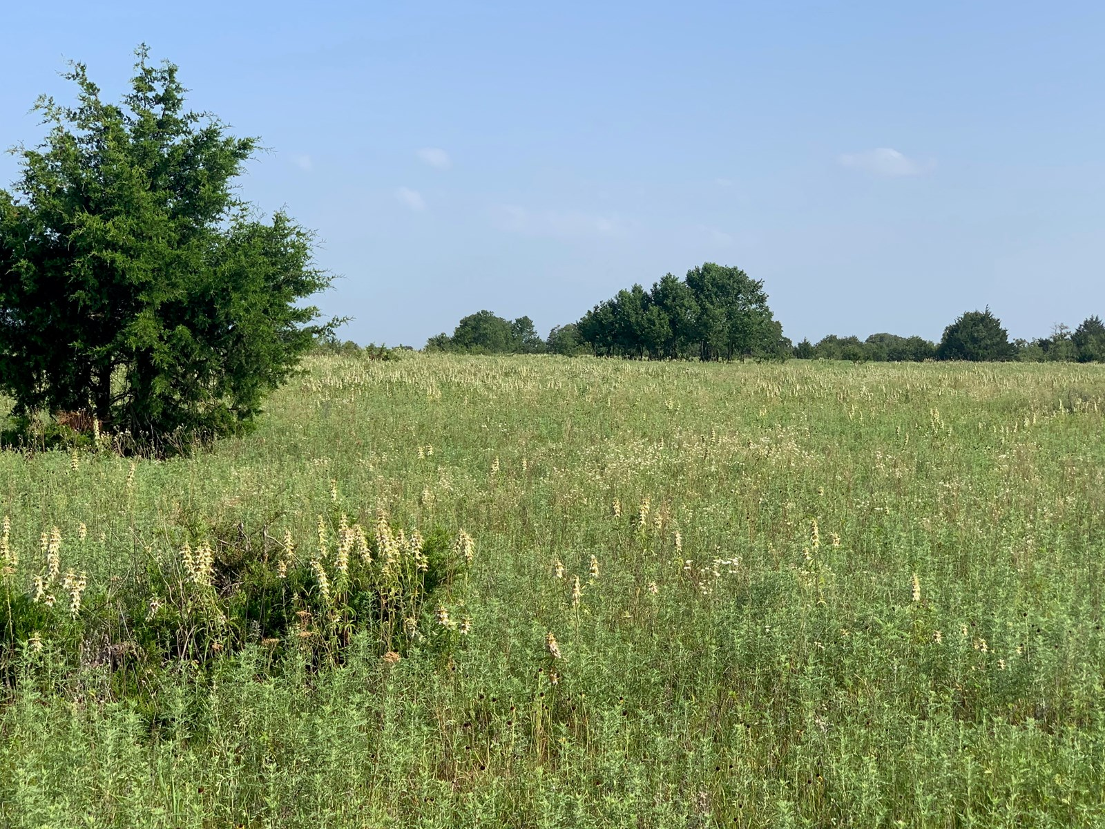 SOUTHERN OKLAHOMA RAW LAND FOR SALE/ SUITABLE FOR BUILDING