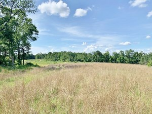 400 ACRES TIMBER HUNTING LAND JEFFERSON COUNTY, SOUTH MS