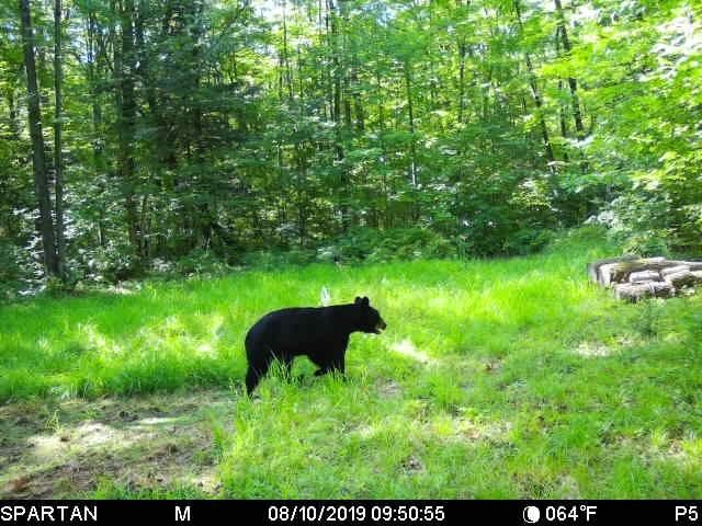 Hunting and Recreational Property in Marathon County WI