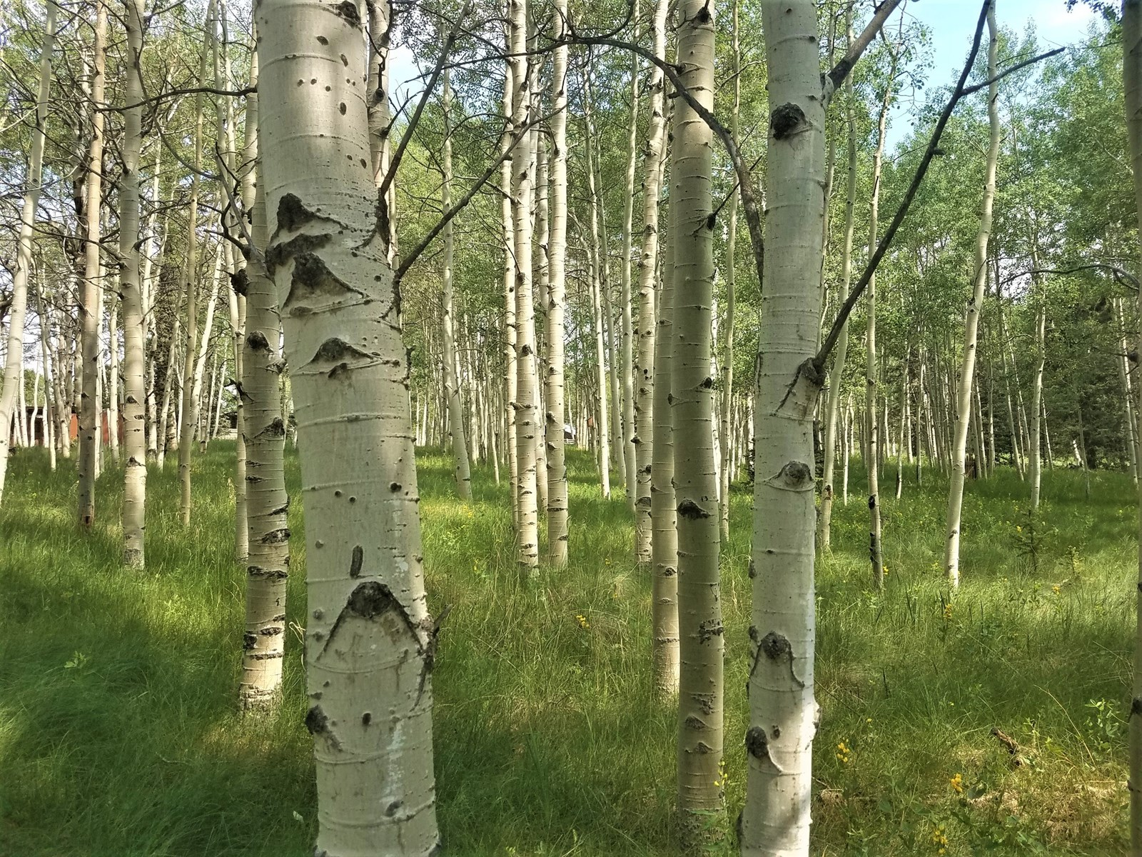 Aspen filled lot