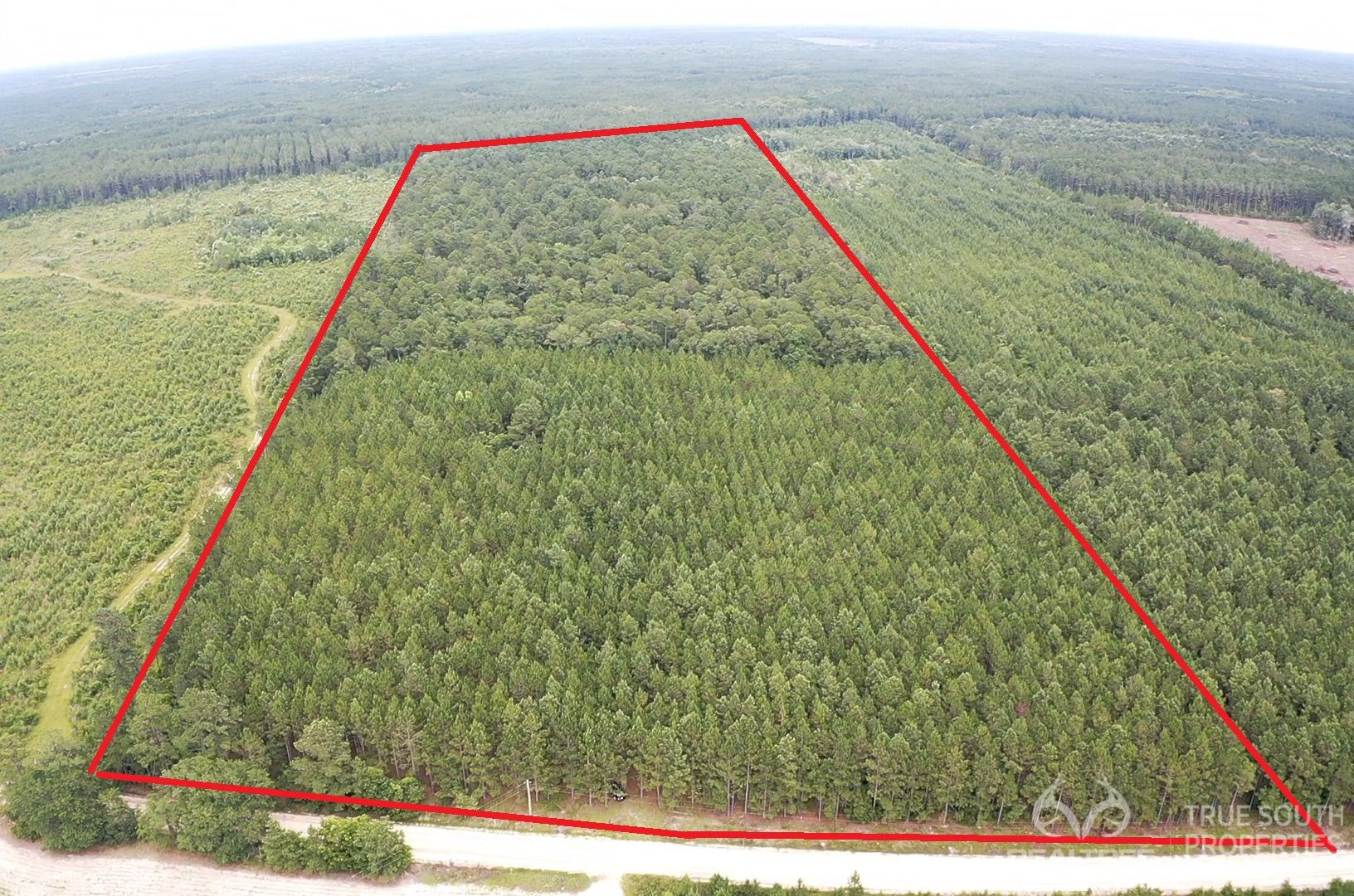 Bulloch County Recreational, Timber and Hunting Land