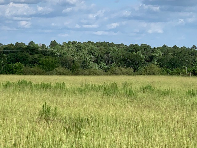 Land For Sale in Henry County, Alabama