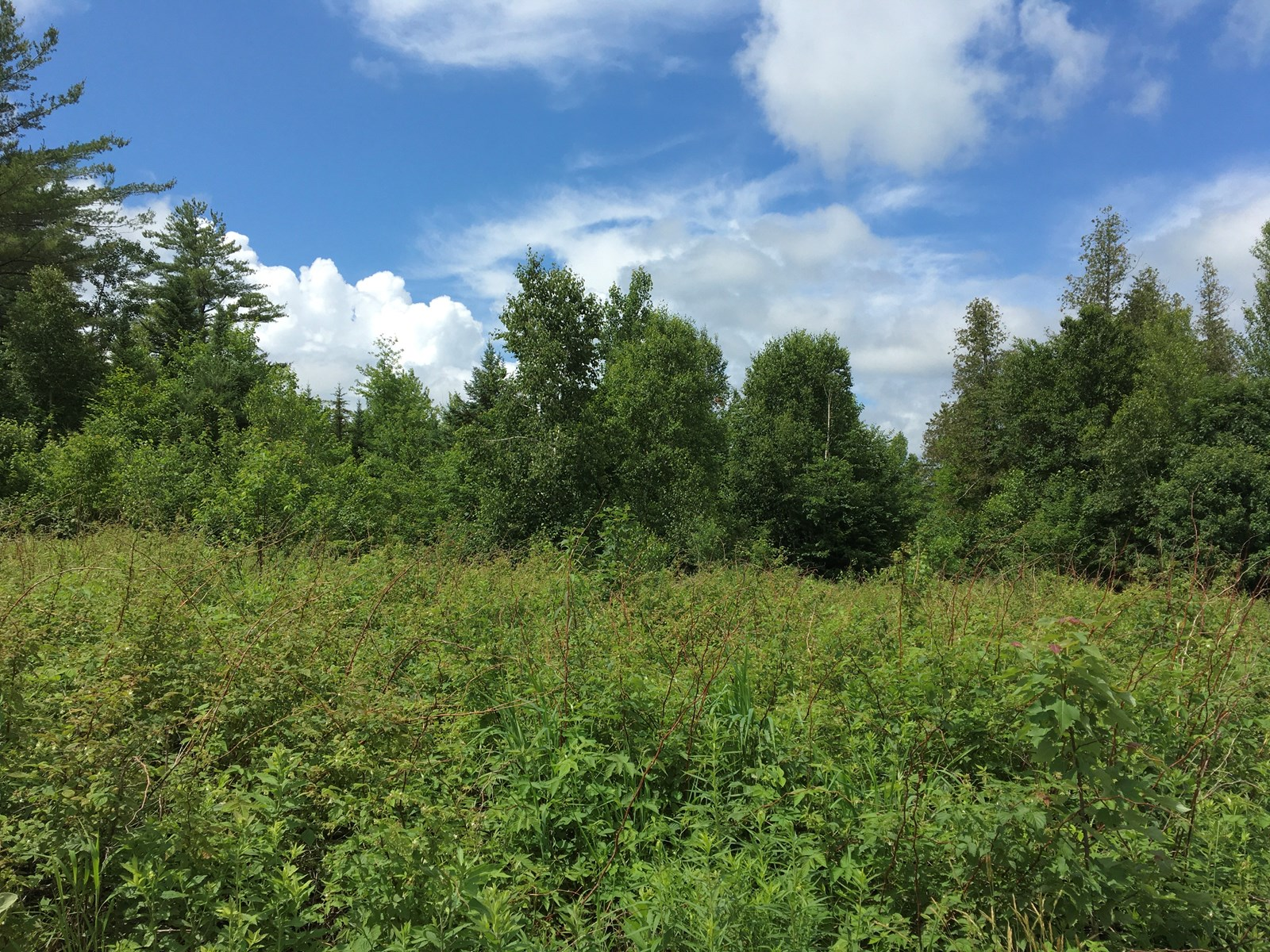 650± Acres of Land for Sale in Sebec, ME
