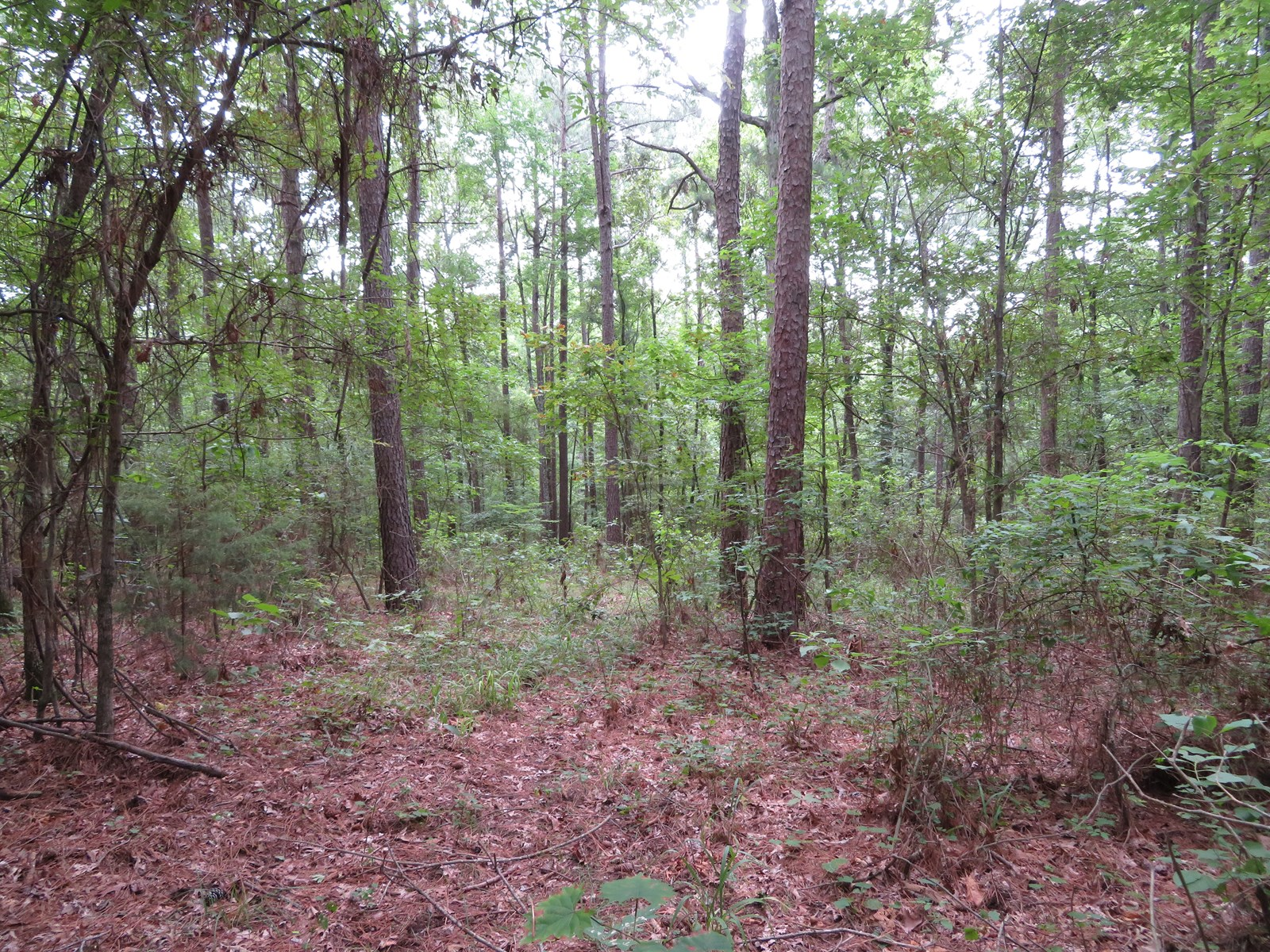 Getaway Recreational Land for Sale Cass County, TX