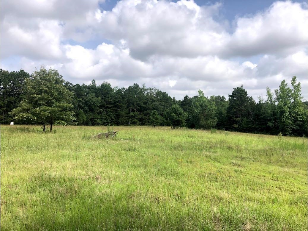 Recreational/Off Grid Timberland Tract For Sale, East Texas