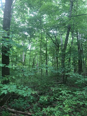17.31 ACRES MOSTLY WOODED LAND IN KNOXVILLE, TN FOR SALE
