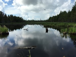 MAINE TIMBER INVESTMENT AND RECREATION LAND FOR SALE