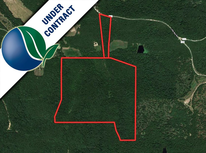 Hunter's Dream! 132 acre hunting ground in Bay, MO for sale!