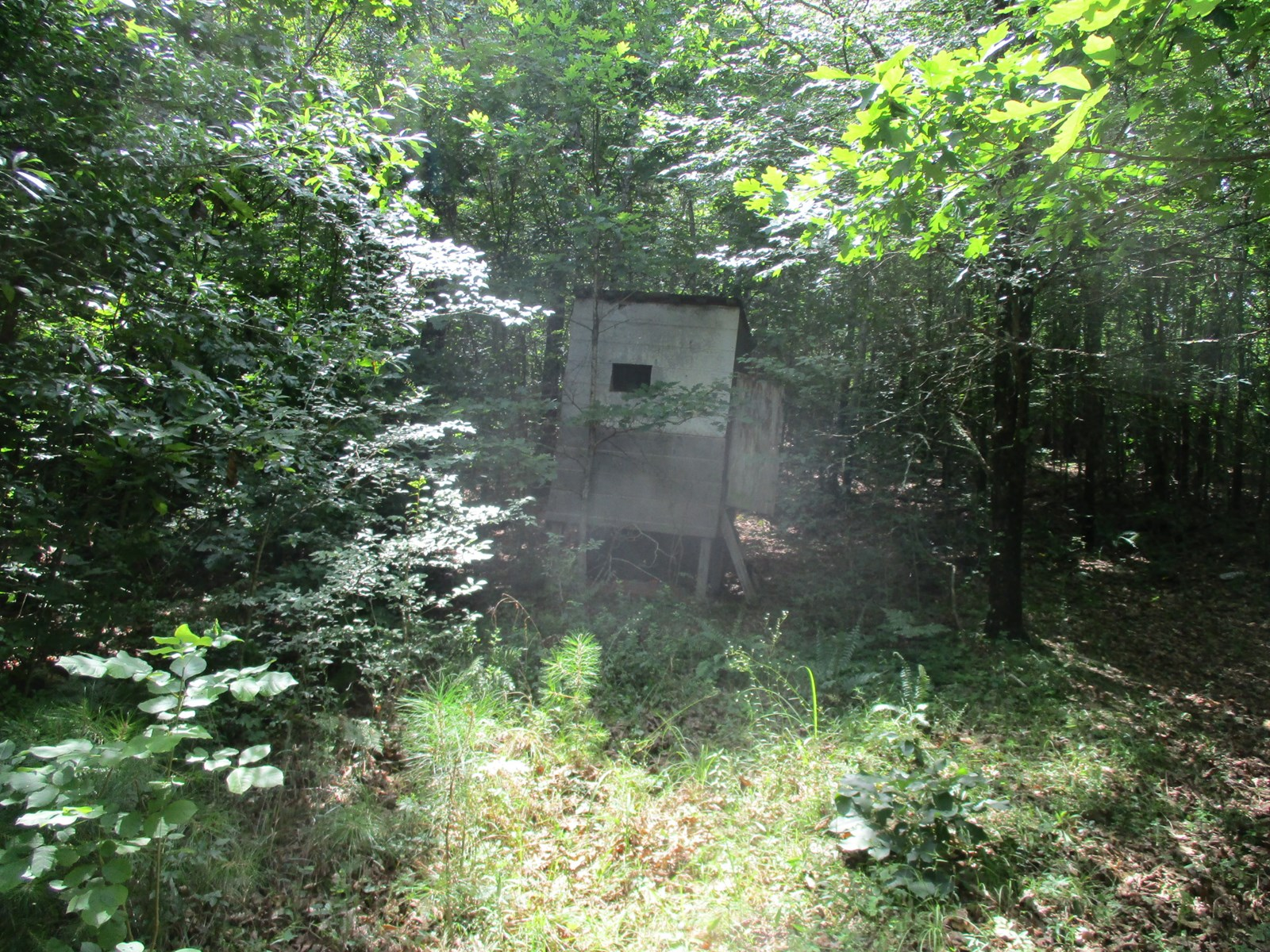 Hunting or Investment Property; Wolfpen Area, near Ramer TN