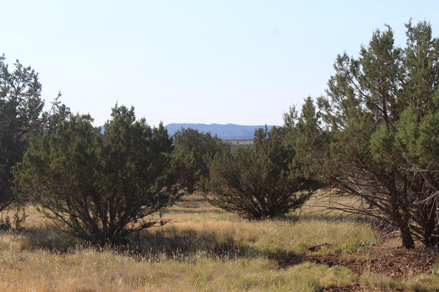 Mountain Land north of Ashfork  AZ for Sale