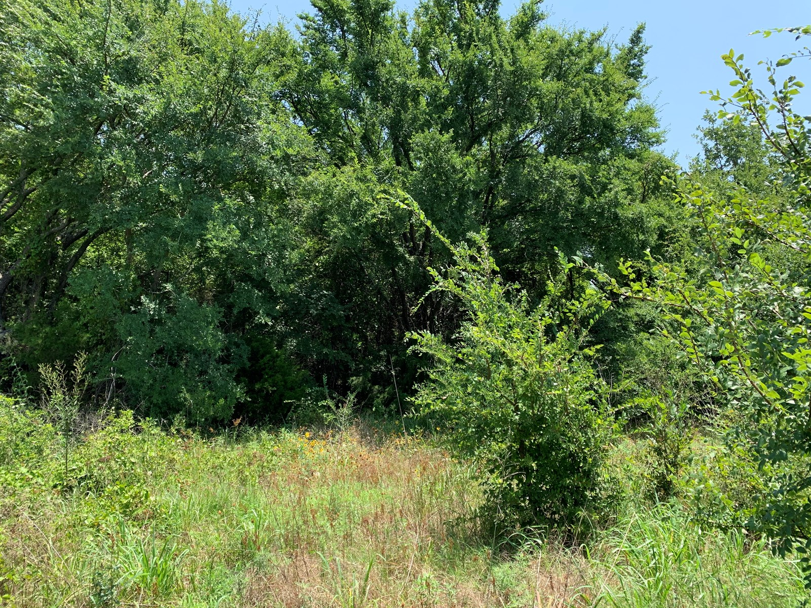 WOODED ACREAGE FOR SALE-CLOSE TO LAKE MURRAY & LAKE TEXOMA