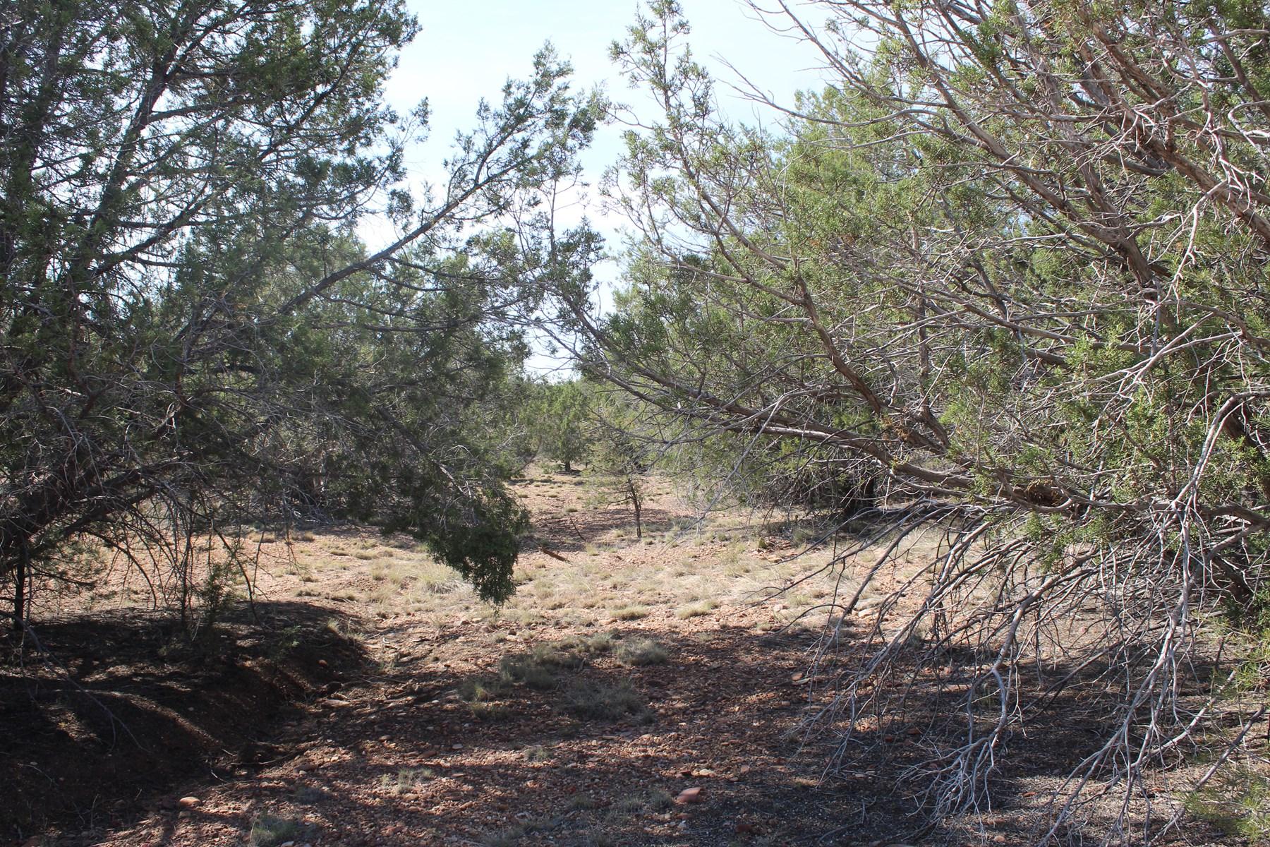 Mountain Land Close to I-40 for sale Northern Arizona