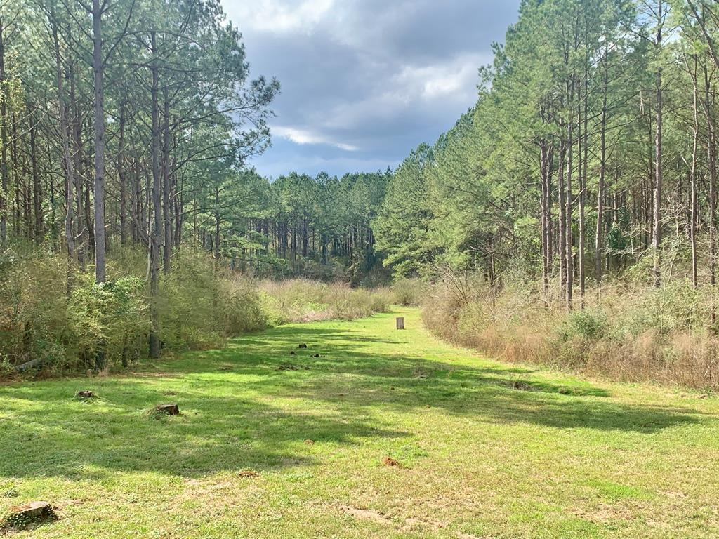 65 Acres, 2 Camps, Hunting Timberland for Sale South MS