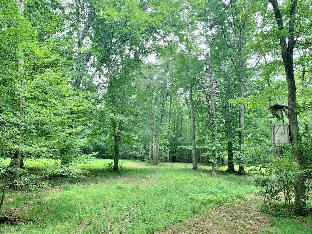 200 Acres Hunting Land, Mature Hardwoods, Amite County,MS