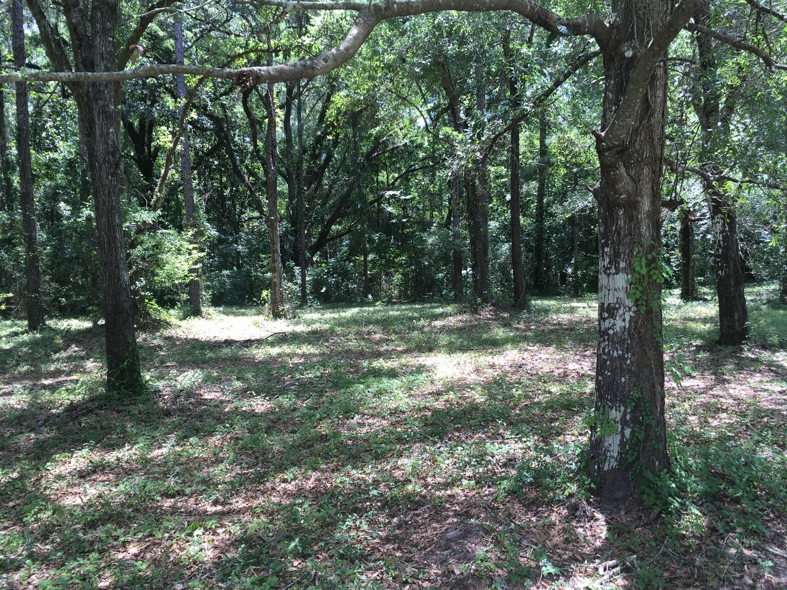 Land residential for sale in Monticello, Florida