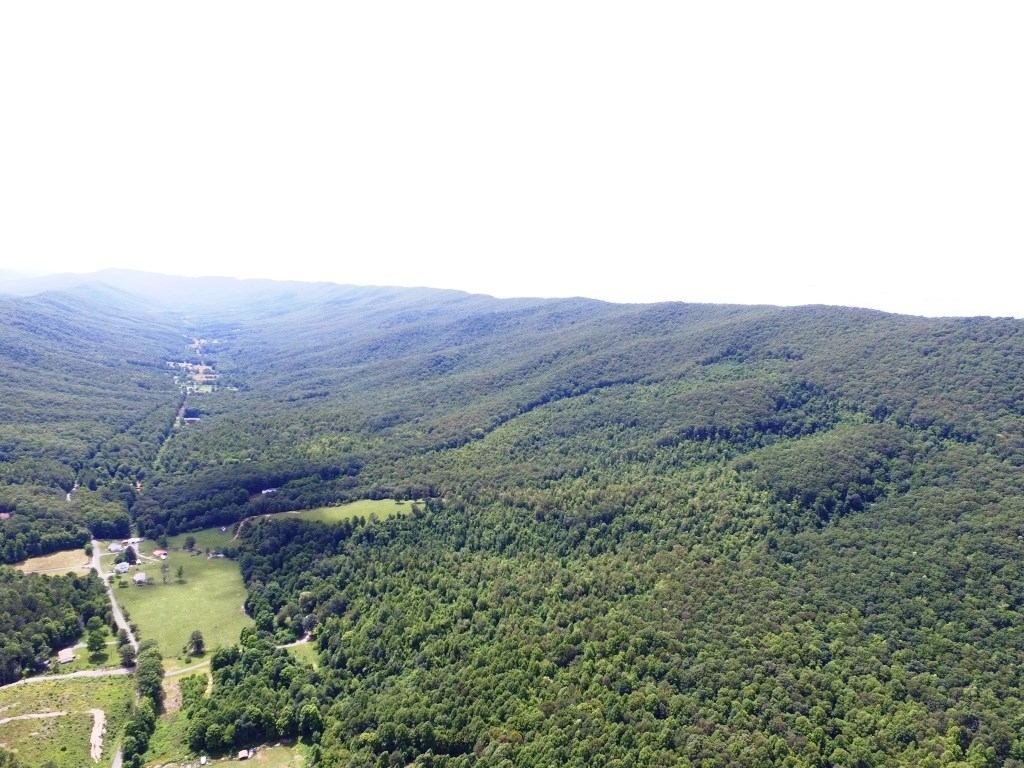 1719 acres - Marketable Timber, Hunting Paradise Bland, VA