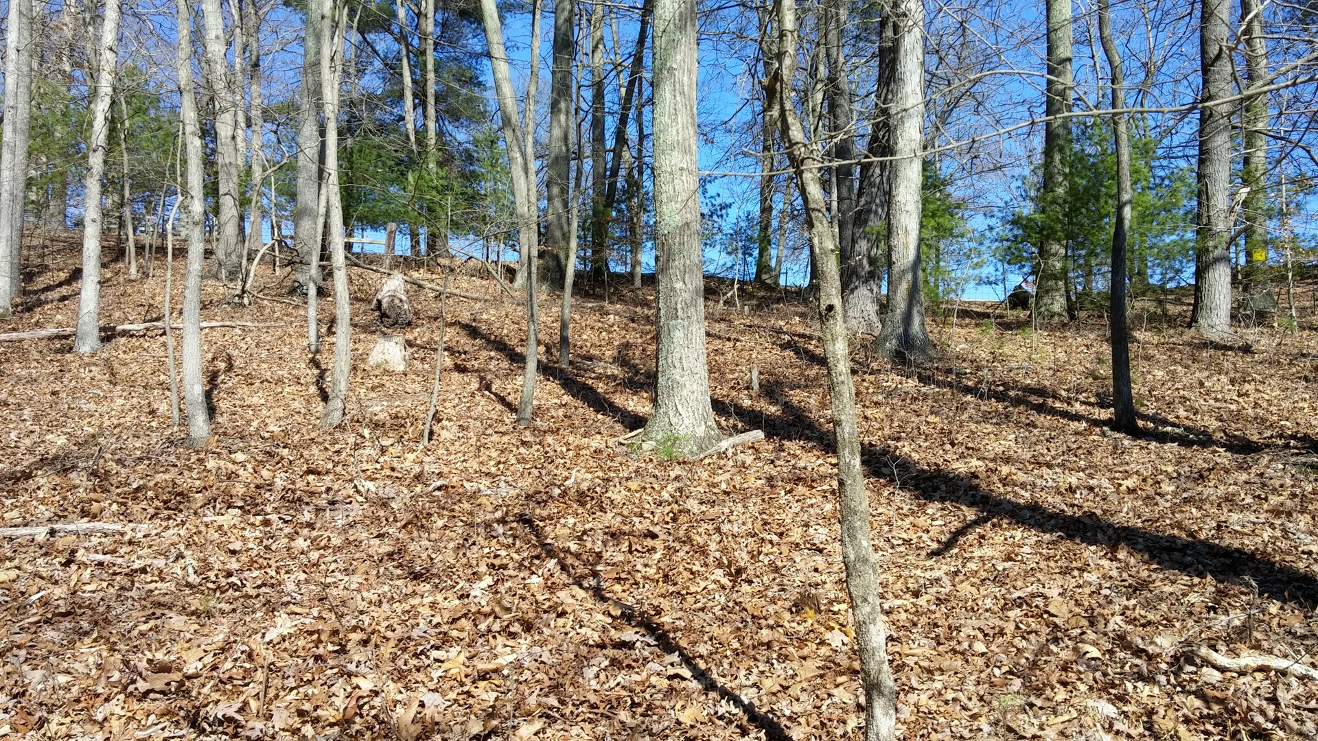 Building Lot for Sale in Dublin VA!