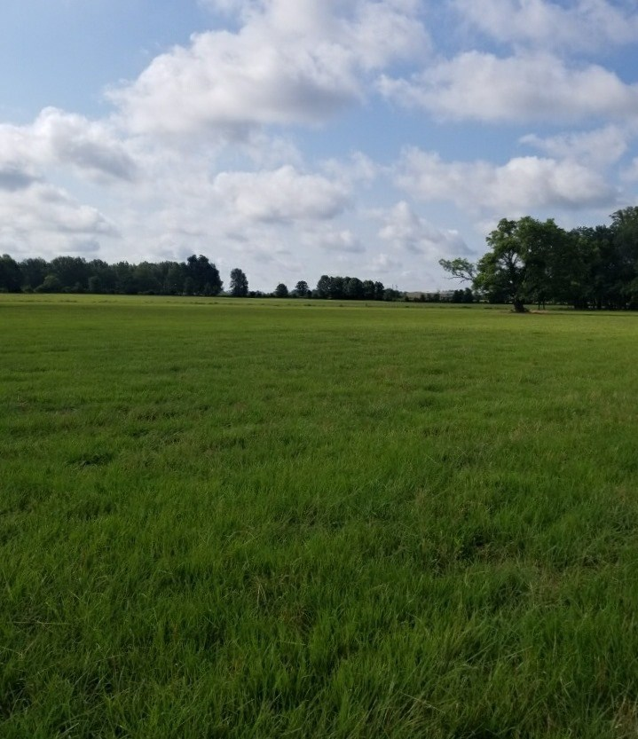 LAND FOR SALE IN WEST CARROLL PARISH