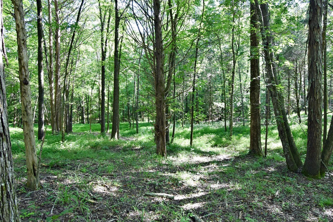 23 Acres of wooded land w/ Owner Terms TN $69,900