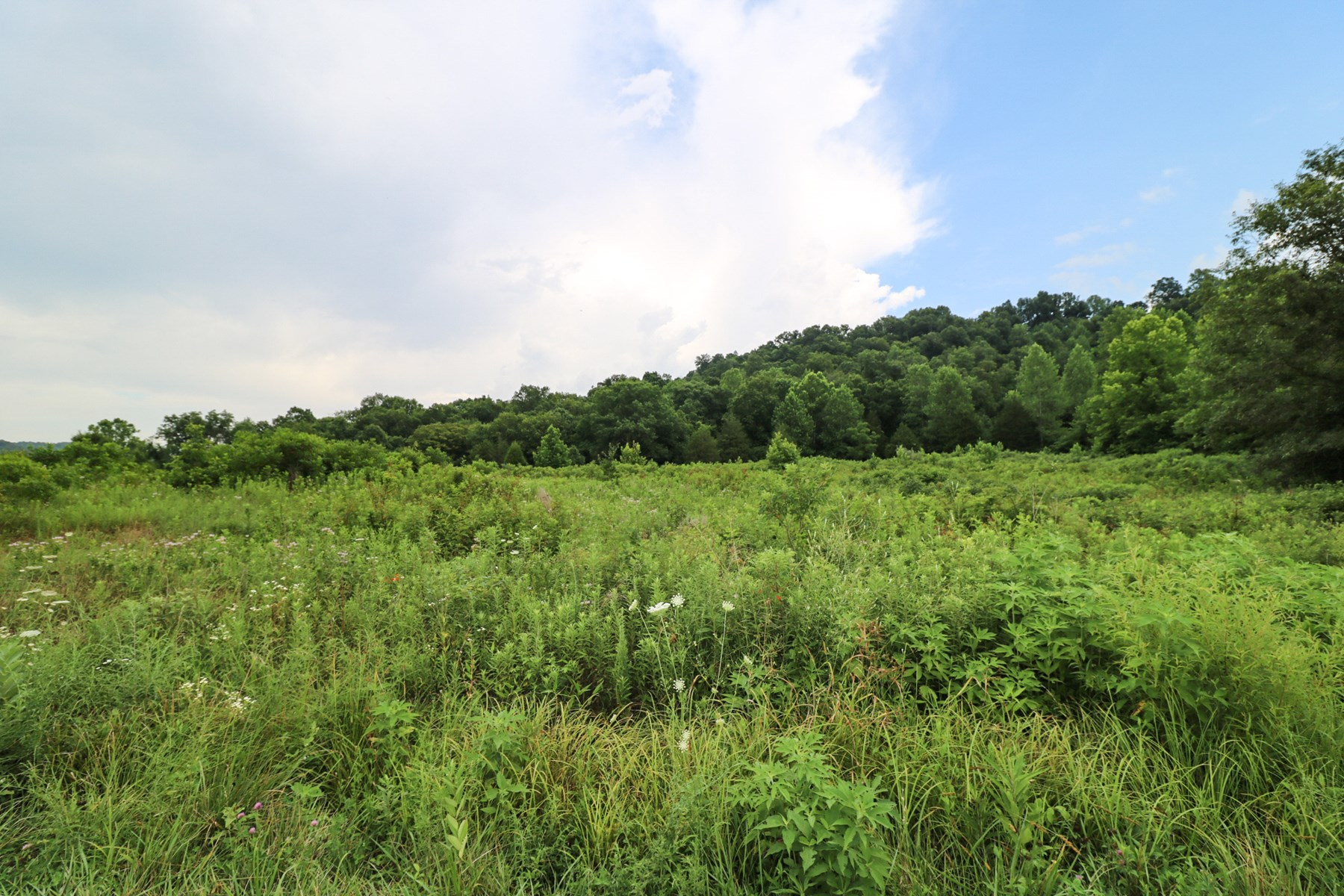 Farmland or Hunting land for sale in Kentucky
