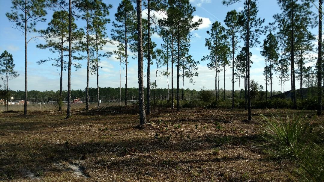106.09 ACRES FOR SALE IN NORTH CENTRAL FLORIDA