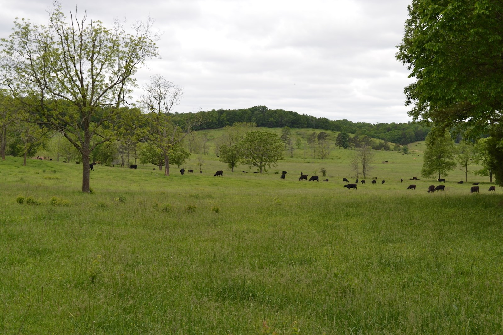 Missouri Horse Farm or Cattle Ranch For Sale - Carter County