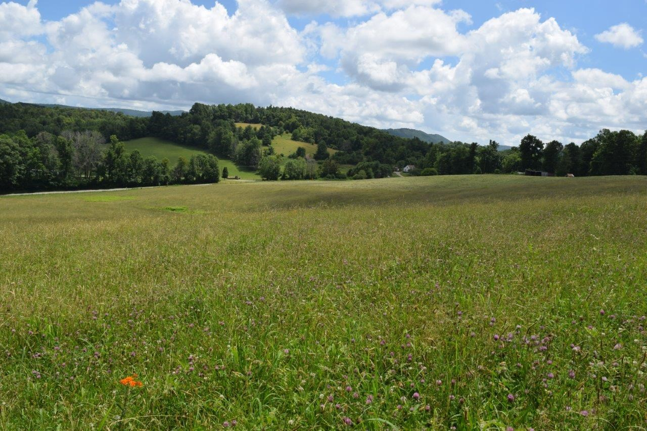 Gorgeous Farm for Sale in Floyd VA