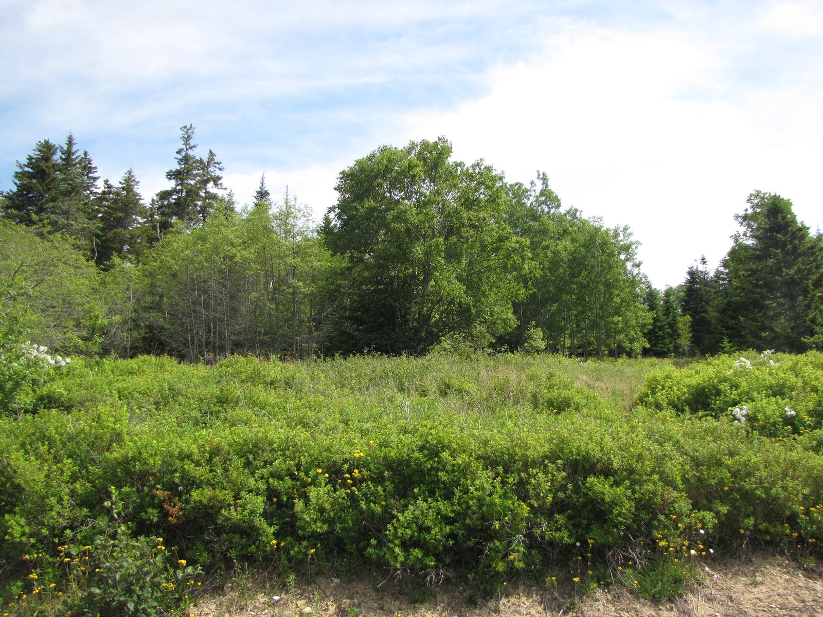 Land for Sale in Machiasport, ME