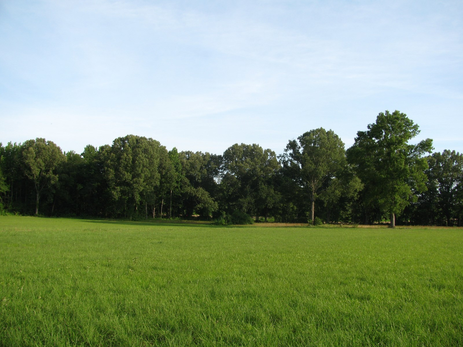FARM LAND FOR SALE IN TN, BUILDING SITES, CREEK, 40 AC