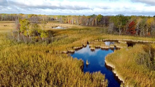 121.88 Acres of Hunting Property for Sale in Mille Lacs Co
