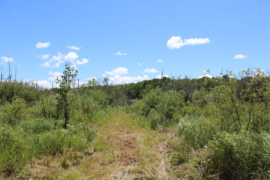 121.88 acres