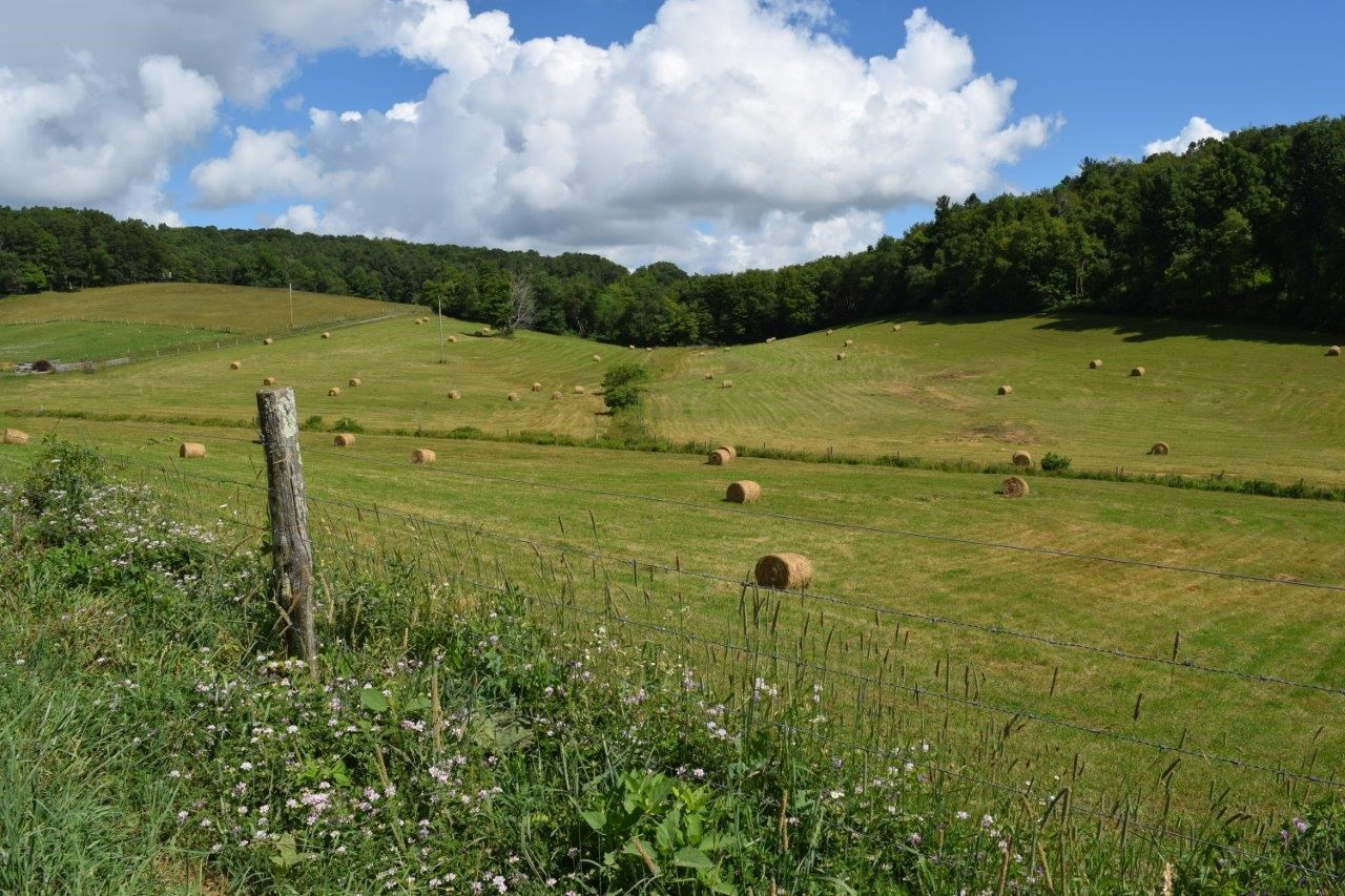 Gorgeous Farm Land for Sale in Willis VA!